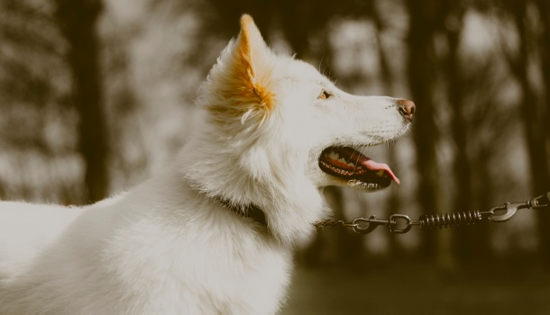 dogs magnetic field, magnetic field, dog senses, dogs, dog abilities
